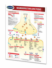 Neuroeffector Junctions - Medical Quick Reference Guide