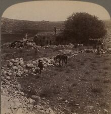 Palestine. Shiloh, the Resting Place of the Ark. Underwood Stereoview