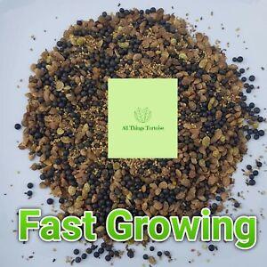 Tortoise Weed Food Seeds. Fast Growing. All things Tortoise
