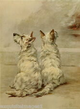 1914 Maud Earl~Two West Highland Terrier Dog Dogs ~ NEW Large Note Cards