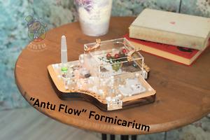 Original Ant Farm Formicarium Antu Flow Wood Ant Nest