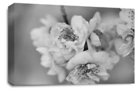 FLORAL FLOWER ART Picture Grey White Spring Blossom Canvas Wall Large