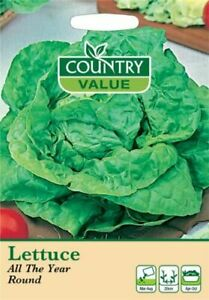 Lettuce All The Year Round Seeds (1100) Country Value by My Fothergill's