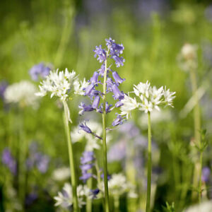 Suttons Woodland Garden Mix Flower Seed for border/shady area approx 1,000 Seeds