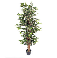 Artificial 5ft / 150cm Variegated Artificial Ficus Tree Blooming Artificial
