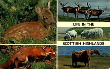 Life in the scottish Highlands postcard 1976 Fox Highland Cattle Red Deer Fawn