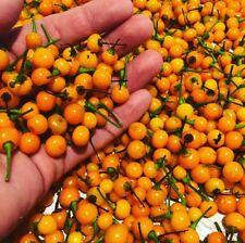 Charapita Chili 10 Samen -Die teuerste Chili der Welt- Aji CHARAPITA
