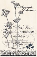 Botanical Asperula Flowers P153 Stampendous RUBBER STAMP Free Shipping  w/m  NEW