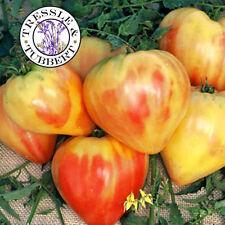 Raras De Tomate Naranja ruso, hortaliza - 20 Semillas-Reino Unido Vendedor