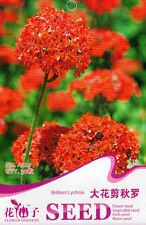 1 Pack 30 Brilliant Lychnis Seeds Lychnis Fulgens Garden Flowers A223