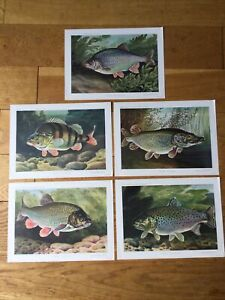 5 VINTAGE BERNARD VENABLES FISH PRINTS.
