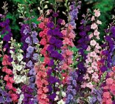 BEAUTIFUL MIXED LARKSPUR! 25 SEEDS!  MIXED COLORS! COMB. S/H! SEE OUR STORE!
