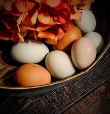 6 Rainbow Flock Fertile Hatching Chicken Eggs