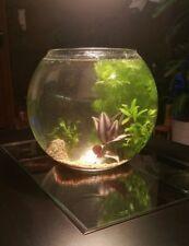 Aquarium Goldfischglas 23cm echte Pflanzen, Filterkies, 2 Halbedelsteine XL SET