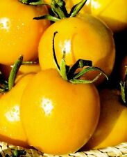 100 Seeds Tomato De Barao Gold. Vegetable Seeds