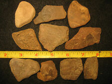 Nice Fossil Turtle Shell Bone Lot, Port Aransas Texas, Rock Collection