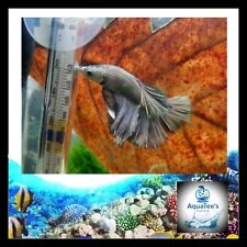 AquaTee's 70 Indian Almond Leaves Terminalia Catappa Shrimp Fish Aquarium tank