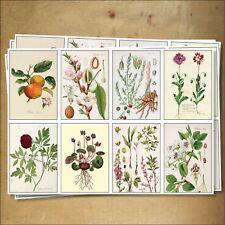 5 Hojas De Victoriano Botánica Ilustraciones Auto Adhesivo Mate papel ecológica