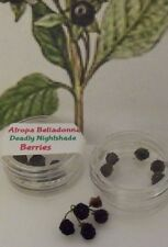 BELLADONNA Atropa Berries Seeds Oil Deadly Night Shade Wicca Magick