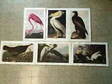Vintage Audubon Bird Art Print SET LOT (6) Full Color Litho Pelican Flamingo etc