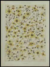 CORYLOPSIS, HABERT DYS -1896- LITHOGRAPHIE, ART NOUVEAU, FLEURS,