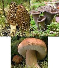 Pilze Bio Probierset 30g Morcheln 30g Herbsttrompeten 30g Steinpilze
