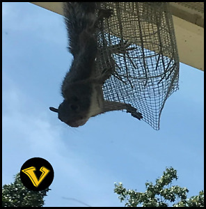 Squirrel Safety Exit Tunnel - Get rid of squirrels fast, without trapping!