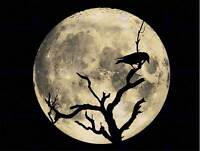 CROW SILHOUETTE MOON BLACK GREY PHOTO ART PRINT POSTER PICTURE BMP1006B