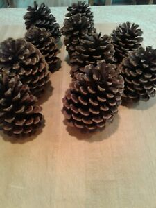 Natural Long Spruce Pine Cones  6 Count 5 12-6