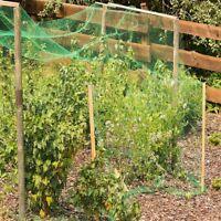 Garden Netting Anti Bird Net Protection Veg Plants Fruit Fine Meshing 2x10m