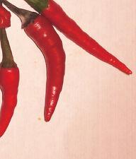 Immergrüner Gemüsebaum ! Zipfelmützenchilli - Thai Chili - Schärfegrad 8 / Samen