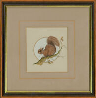 Anne Jones - Signed & Framed Contemporary Watercolour, The Red Squirrel
