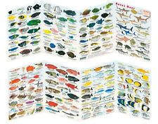 Fischfaltblatt Rotes Meer Fischbestimmungskarte Faltblatt zur Fischbestimmung