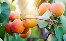 30L Zitrus - Pflanzenerde 3 x 10L Sack Nektarinen Aprikosen Zitronen Gartenerde