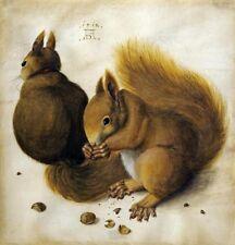 "ALBRECHT DURER, ""Two Squirrels, One Eating a Hazelnut"",  digital, 16""h x 15.385"""