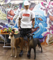 """Free Shipping 1/6 Scale Greadog Greyhound Dog Animal for 12"""" Action Figure Toy"""