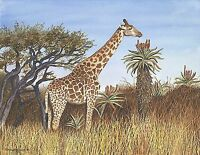 Giraffe Ltd edition Giclee print of watercolor painting 11 x 14 wildlife animal