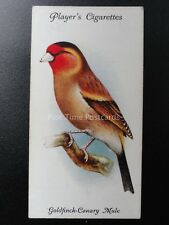 No.14 GOLDFINCH CANARY MULE - Aviary and Cage Birds by John Player 1933