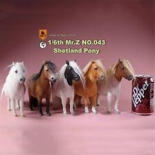Mr.Z 1/6 Shetland Pony Horse Figure Equidae Animal Collector Decoration Colt Toy
