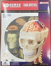 New Human Cranial Nerve Skull Vision Model 4D School Science Project !