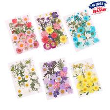 Pressed Natural Dried Flowers Mixed Organi-c DIY Art Floral Scrapbooking Decor