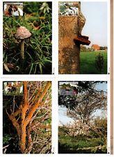 Maxi cards set Netherlands 2001 Maximum card Nature