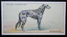 Scottish Deerhound  Original Vintage Illustrated Card # VGC