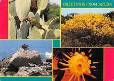 Dutch Caribbean Greetings from Aruba Sence of the flora and fauna of Aruba