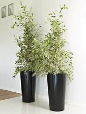 2 Stück hohe Blumentöpfe mit Einsatz in Schwarz Euro3Plast Tuit Übertopf Vasen