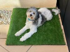 GOLDEN MOON Pet Grass Mat Series PE Dog Potty Replacement Easy to Clean