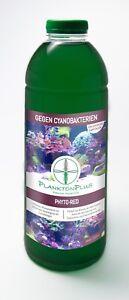 Phyto-Red 1 Liter gegen Cyanobakterien Plankton Plus Phytoplankton Synechococcus