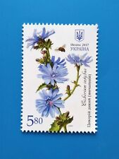 Cichorium intybus 1 Stamp Medical and melliferous plants Ukraine 2017 chicory