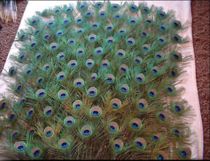40Pcs Natural Peacock Tail Feathers Party Wedding Clothing Craft DIY Decoration