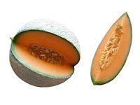 Honigmelone Melone Cantaloupe Melone, Zuckermelone 10 Samen